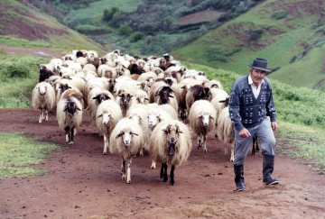 Antonio Moreno con sus ovejas en Lomo Gordo